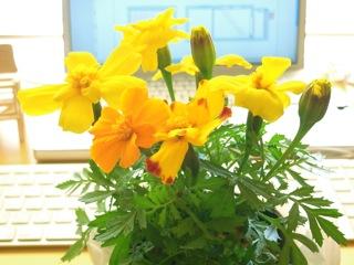 黄色いお花.JPG